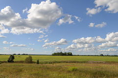 Green meadow with some trees and clouds in blue sky. Summer rural landscape with green meadow and forest on the horizon, white clouds in blue sky Stock Photography