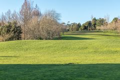 Green meadow with some trees under a clear blue sky. In Hamilton Botanical Gardens New Zealand Royalty Free Stock Image