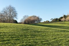 Green meadow with some trees under a clear blue sky. In Hamilton Botanical Gardens New Zealand royalty free stock photo