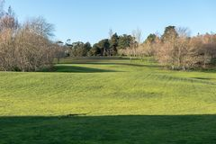 Green meadow with some trees under a clear blue sky. In Hamilton Botanical Gardens New Zealand stock image