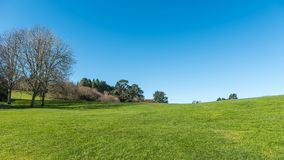 Green meadow with some trees under a clear blue sky. In Hamilton Botanical Gardens New Zealand Royalty Free Stock Photos