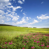 Green meadow . spring Stock Image