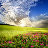 Green meadow . spring Royalty Free Stock Images