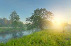Green meadow in spring morning Stock Photos