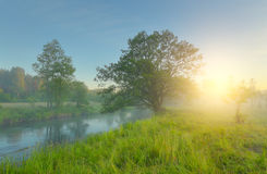 Green meadow in spring morning Royalty Free Stock Images