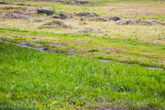 Green meadow in a summer day. With a walking path and yellow grass Royalty Free Stock Photos