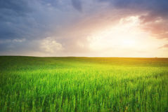 Green meadow. And sunlight. Composition of nature Royalty Free Stock Photos