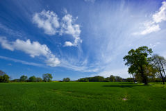 A green meadow and a sunny, blue sky. On this picture you can see alandscape consisting of a green meadow, some trees and a sunny, blue sky stock image