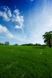 A green meadow and a sunny, blue sky. On this picture you can see a landscape consisting of a green meadow, some trees and a sunny, blue sky royalty free stock image