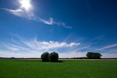 A green meadow and a sunny, blue sky. On the picture you can see a green meadow, a blue sky and some trees stock photos