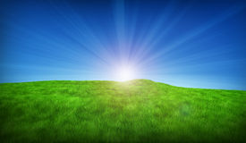 Green meadow on a sunny day. Beautiful green meadow on a sunny day Royalty Free Stock Image