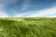 On the green meadow Royalty Free Stock Photography