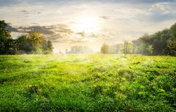Green meadow at sunrise Stock Image