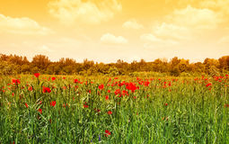 Green meadow in sunrise Stock Photo