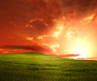 Green Meadow sunset Royalty Free Stock Image