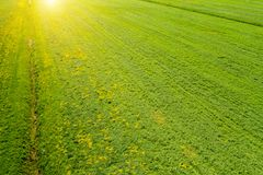 Green meadow at sunset aerial view stock photography