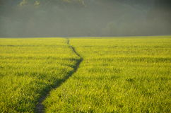 Green meadow in the sunshine. In the evening Royalty Free Stock Photography
