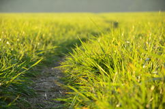 Green meadow in the sunshine. In the evening Stock Images