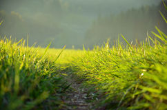 Green meadow in the sunshine. In the evening Royalty Free Stock Image