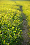 Green meadow in the sunshine. In the evening Royalty Free Stock Photos