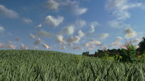 Green meadow, time lapse clouds, countryside scenery, stock footage stock video footage