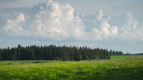 Green meadow timelapse. Green lush meadow, forest and fluffy summer clouds timelapse stock video footage