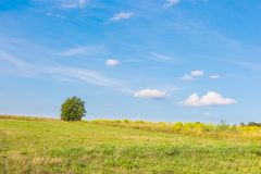 Green meadow with tree under blue sky with clouds Royalty Free Stock Image