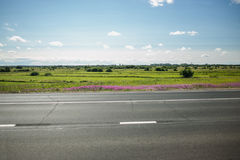 Green meadow with trees and asphalt road, blue sky. And field on background royalty free stock image