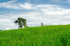 Green meadow with trees and blue sky Stock Photography