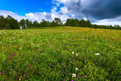Green meadow, trees, landscape Russian. Royalty Free Stock Photography