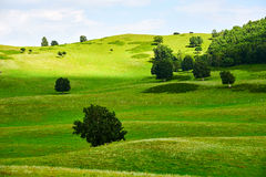The green meadow and trees Stock Photos