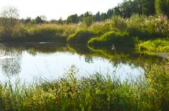 Green meadow and trees with pond landscape in the nature park,beautiful summer. Season stock photography