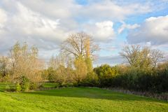 Green meadow with trees and shrubs in the Flemish countryside. Landscape with green meadow, trees and shrus on a sunny day with clear blue sky in the Flemish Royalty Free Stock Image