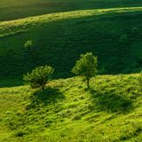 Green meadow and trees Royalty Free Stock Photos