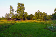 Green meadow, trees and sunset. In the village Stock Photos