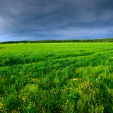 Green meadow under blue sky Stock Photos