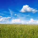 Green meadow under blue sky Stock Image