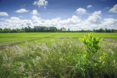 Green meadow under blue sky with clouds Stock Photography