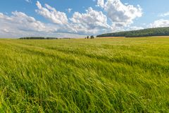 Green meadow under blue sky with clouds. stock images