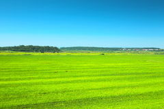 Green meadow under blue sky Stock Images