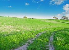 Green meadow under a blue sky Stock Photos