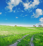 Green meadow under a blue sky Stock Images