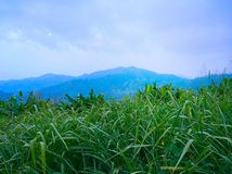 Green meadow under blue sky. This is the top of the hill in Thailand. It's perfect view Royalty Free Stock Photo