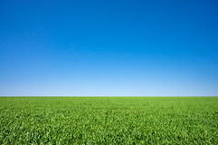 Green meadow under a blue sky. Vibrant green meadow under a blue sky Royalty Free Stock Image
