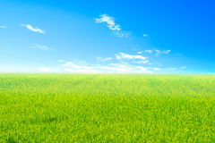 Green meadow under bright Sky Stock Photos