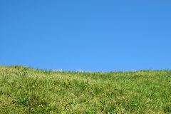 Green meadow under a clear blue sky Stock Images