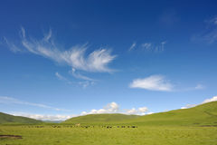 Green meadow under the sky Stock Photo
