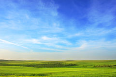 Green meadow under the sky. Green meadow under the beautiful blue sky with white clouds Stock Image
