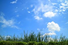 Green meadow under the sunny blue sky with white clouds Royalty Free Stock Photos