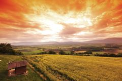 Green meadow under sunset sky Stock Photo
